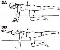 quadruped_exercise