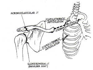 shoulder_joint